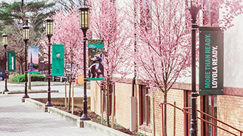 Trees blooming pink along the pathway behind Humanities
