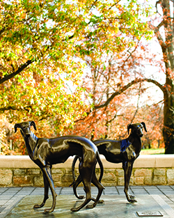 Greyhound statues in front of the FAC