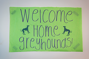 Bright green sign reading 'Welcome Home Greyhounds'