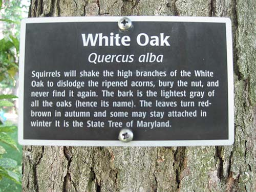 White Oak sign