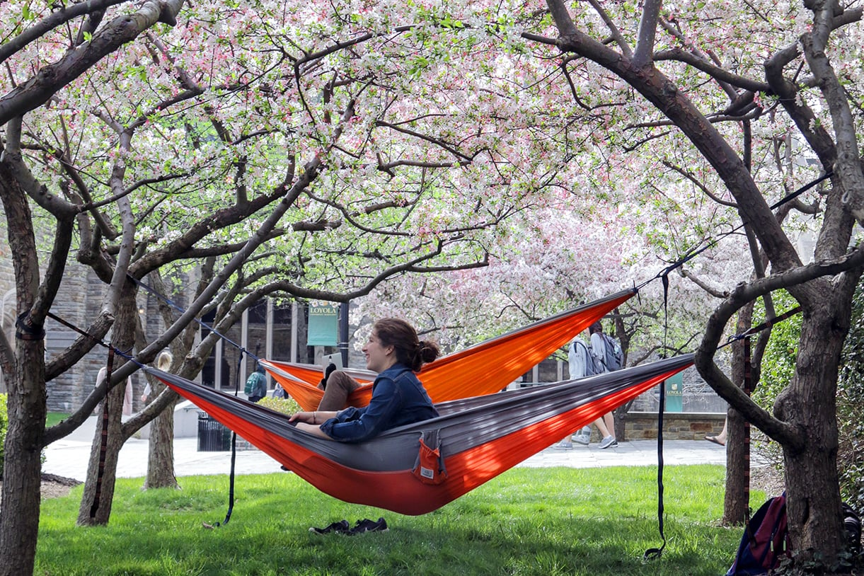A student relaxes on a hammock hanging between trees with pink flowers in the spring