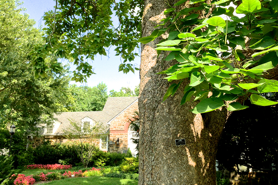 A tree provides shade for the Alumni House and its gardens.