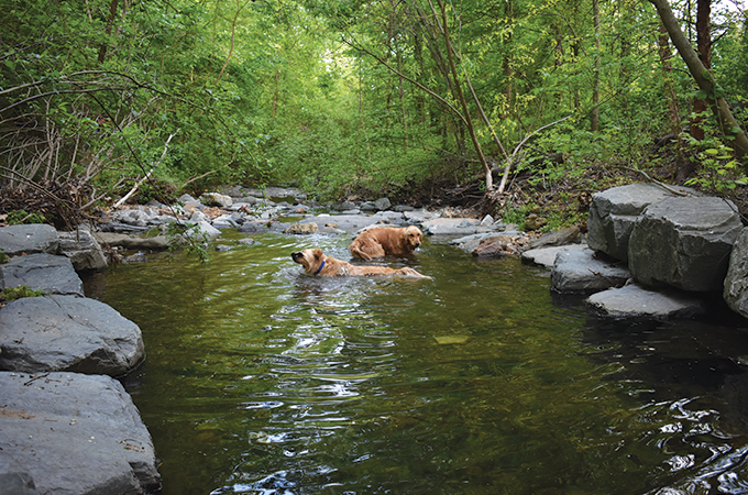 A pair of golden retrievers swim around in the river.