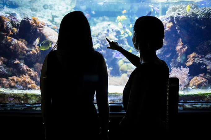 Silhouettes of two students at the National Aquarium, looking and pointing at a tank filled with fish