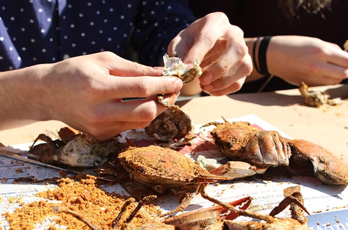 Hands holding and breaking apart cooked crabs