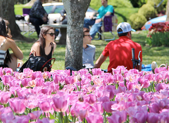 Students sitting in the grass on a spring day, with a patch of tulips in the foreground