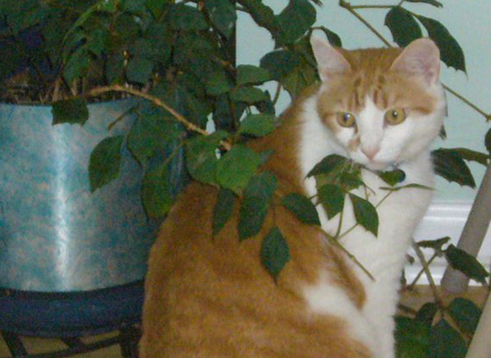 Cat sits by vase, nestled between the plant's foliage.