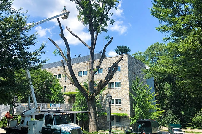 White tree being removed by landscapers