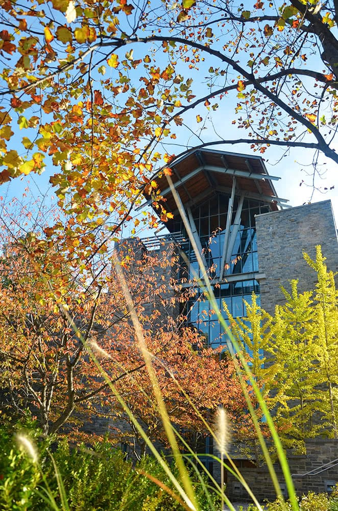The top of the Sellinger Building framed by fall foliage