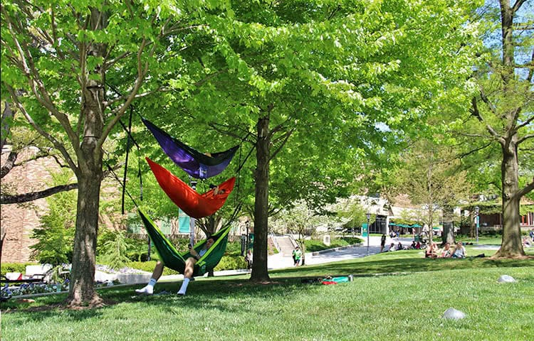 Students relaxing on the quad in hammocks