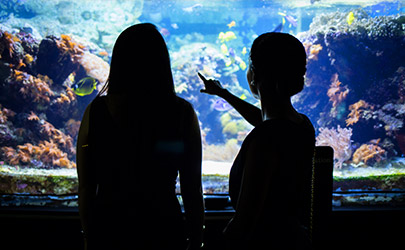 Silhouette of two people looking at and pointing at a large fish tank